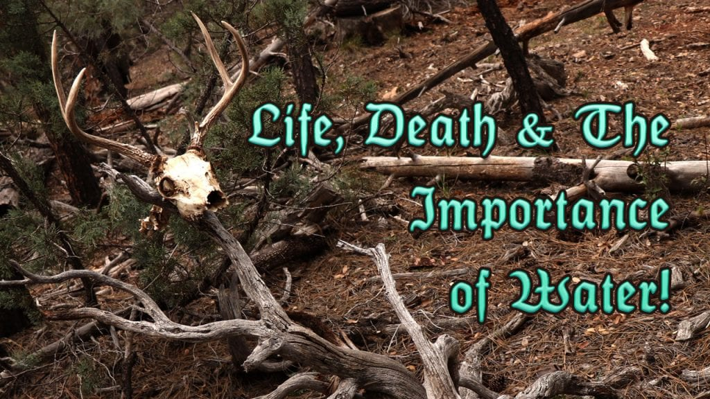 Life Death Importance Of Water